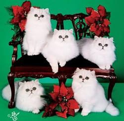 9f97bf08_dixielandcats.jpg