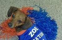 Fido Item: Pet jerseys
