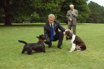 GARDEN STATE: Flanked by Karl Rove (Toby Jones), George W. Bush (Josh Brolin) realizes his presidency is going to the dogs in W. (Photo: Lionsgate)