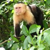 Hoping to help monkeys, woman gets scammed