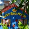 Bugs: the gardener's friend