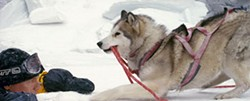 CHRIS LARGE / DISNEY & WINKING PRODUCTIONS - LENDING A HELPING PAW Maya saves Bruce Greenwood from getting iced in Eight Below.