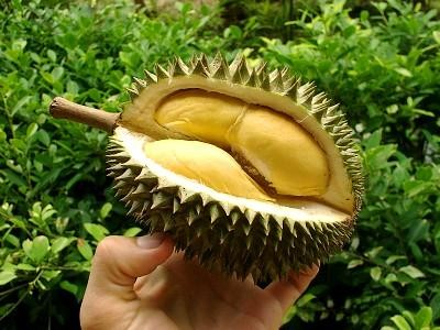 Durian-Fruit-Yellow-Pulps.jpg