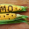 More anti-GMO protests planned in Charlotte