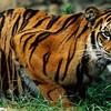 N.C. should ban dangerous wildlife ownership