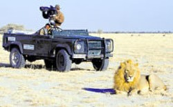 DESTINATION CINEMA - READY FOR HIS CLOSE-UP The star of Roar: - Lions of the Kalahari has no trouble getting  into - character