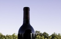 Saveur editor predicts North Carolina (and other states) wine will be popular in 2012
