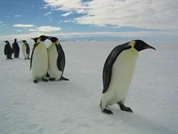 JÉRÔME MAISON / BONNE PIOCHE PRODUCTIONS & ALLIANCE DE PRODUCTION CINÉMATOGRAPHIQUE & WARNER INDEPENDENT - SNOW WHITE AND THE SEVEN DWARFS The foul-weather fowls in March of the Penguins
