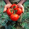 <b>Spring Guide:</b> 5 steps to a backyard vegetable garden