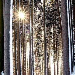 CPCC_dance_winter_2013.jpg