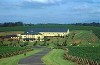 Tour the NC vineyards