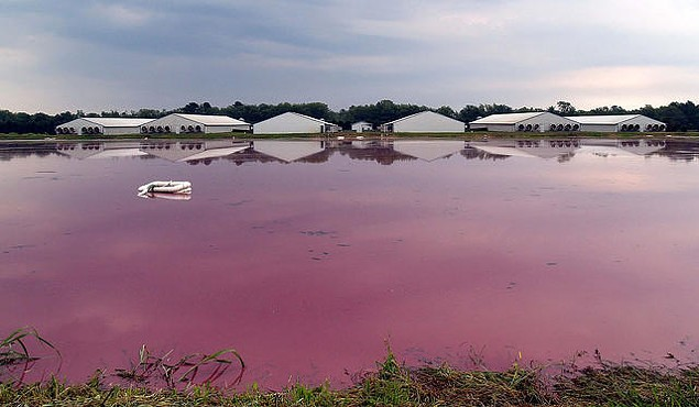 A hog waste county in Beaufort County. (Photo courtesy of Defmo/Creative Commons)