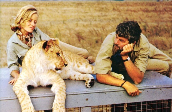 Virginia McKenna and Bill Travers in Born Free (Photo: Twilight Time)