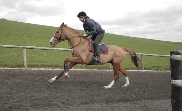 Dark Horse (Photo: Sony Pictures Classics)