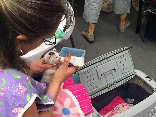Amy Chapman with CMPD's Animal Care & Control feeds a kitten. (Courtesy of AC&C)