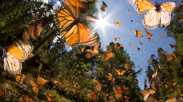 butterflies.png