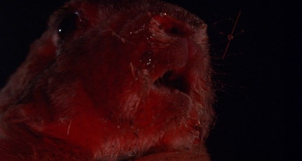 Night of the Lepus (Photo: Shout! Factory)