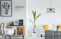 Padlist: An online real estate database platform for renters and landlords.