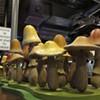 Mellow Mushroom, 10/19/10