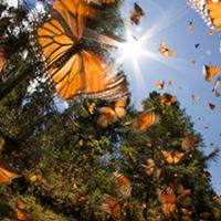 The unique life of butterflies