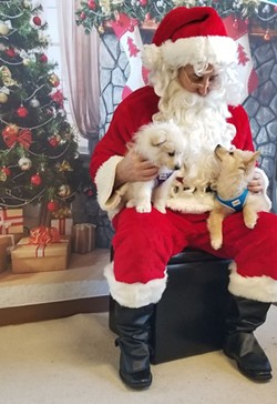 Free Santa Photos by Charlotte Black Dogs - Uploaded by Donna A. Peters