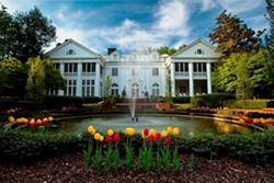 1edeeaa0_duke_mansion_tulips_1_.jpg