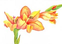 8a566d7f_gladiolus_gno.jpg