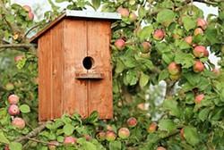 f795a710_birdhouse-1537806_640.jpg