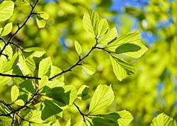 f64255fd_persian-oak-wood-3064187_640.jpg