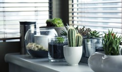 2604b196_cacti_and_succulents.jpg