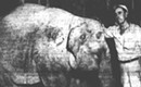 Question the Queen City: When an elephant roamed Charlotte