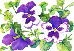 Watercolor by Janis Schneider