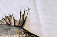 Where to find it: High-end Fin Fish