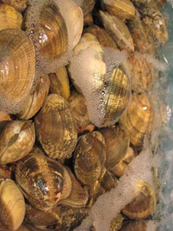 MARLITH/WIKIPEDIA - YOUR FUTURE'S A CLAM: The 4th Annual Clam Jam at Tavern On The Tracks goes down Aug. 6.