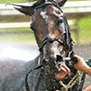 A horse being cooled off after racing in 90-degree heat at Arlington Park in July. Photograph by Bill Guerriero, the winner of our Facebook photo contest.