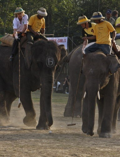 An elephant never forgets (being used in a polo tournament).