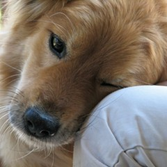At last, an explanation of How Dogs Love Us