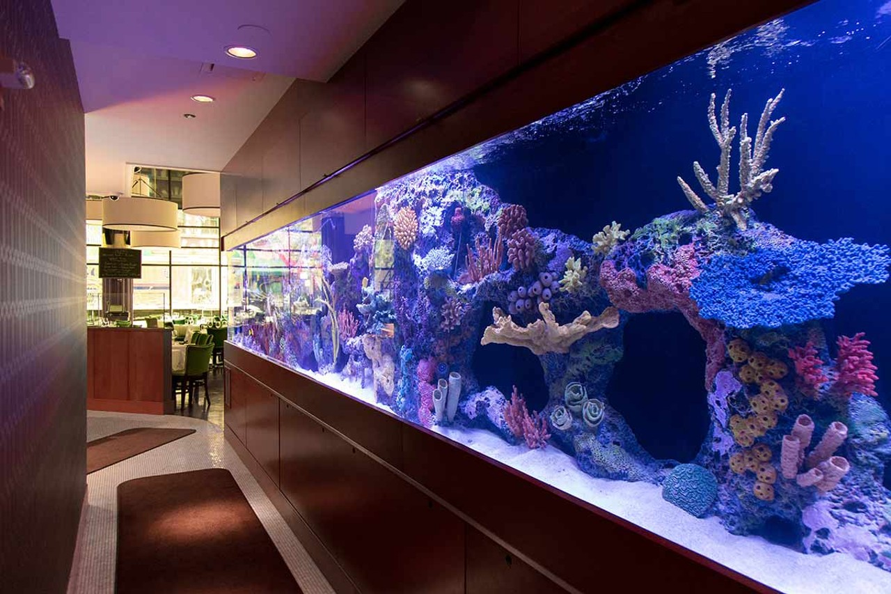 The fish is fresh and pricey at c chicago restaurant for Fish restaurant chicago
