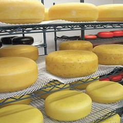 Dispatches: Illinois's new artisanal farmstead cheese maker