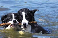 Dog days of summer: Five canine-friendly summertime events