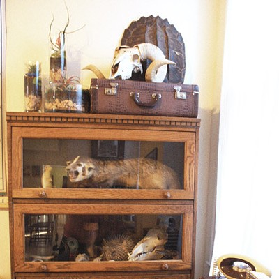 Space: Cabinet of curiosities