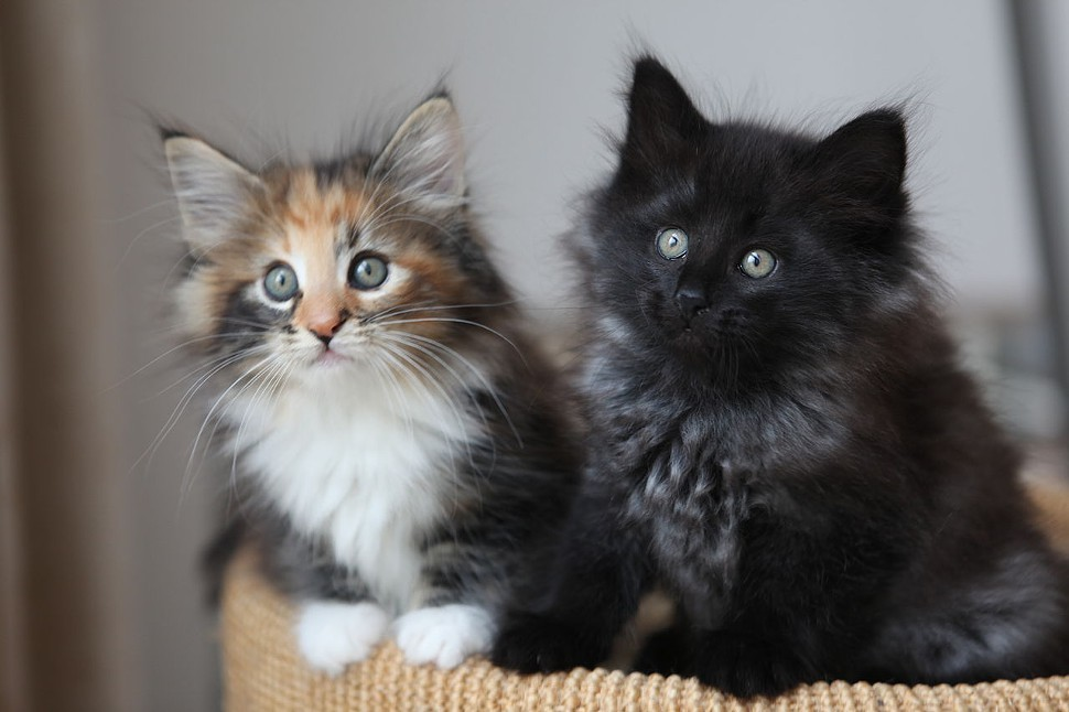 Heres a couple kittens