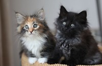 Shower the kittens . . . with love! And pet-friendly wipes