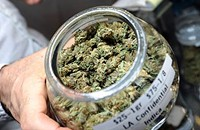 In the weeds of the state's medical marijuana law