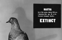 There's an important lesson in <i>From Billions to None</i>, a new documentary about the extinct passenger pigeon