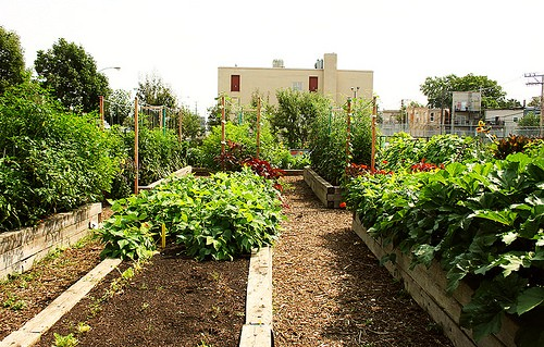 North Lawndale Green Youth Farm on Ogden Avenue