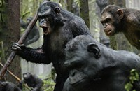 <i>Planet of the Apes</i>: A topsy-turvy world in which the writers reigned