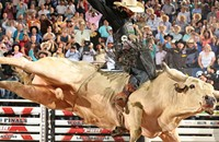 <i>Reader</i>'s Agenda Sun 1/12: Professional bull riders, <i>Elemeno Pea</i>, and Hiss Golden Messenger