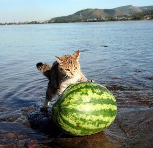 So thats where watermelon come from...