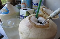 Take a Sip: Fresh Coconut Water Meets the Sugarkiss